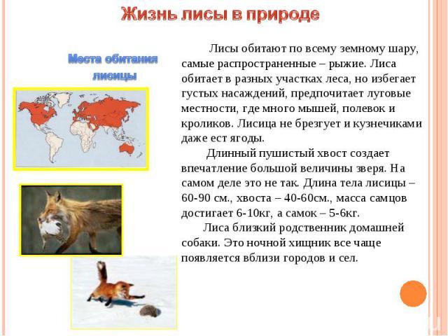 Жизнь лисы в природе Лисы обитают по всему земному шару, самые распространенные – рыжие. Лиса обитает в разных участках леса, но избегает густых насаждений, предпочитает луговые местности, где много мышей, полевок и кроликов. Лисица не брезгует и ку…