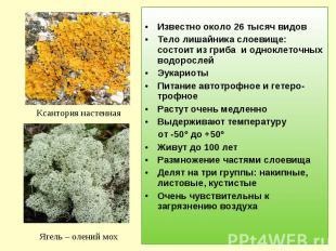 Известно около 26 тысяч видовТело лишайника слоевище: состоит из гриба и однокле