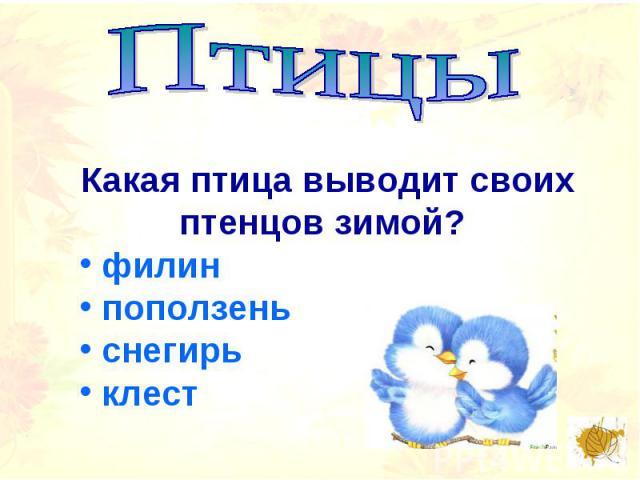 ПтицыКакая птица выводит своих птенцов зимой? филин поползень снегирь клест