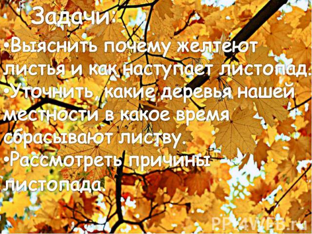 Задачи:Выяснить почему желтеют листья и как наступает листопад.Уточнить, какие деревья нашей местности в какое время сбрасывают листву.Рассмотреть причины листопада.