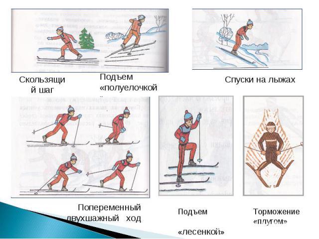 Скользящий шагПодъем «полуелочкой»Спуски на лыжахПопеременный двухшажный ходПодъем «лесенкой»Торможение «плугом»