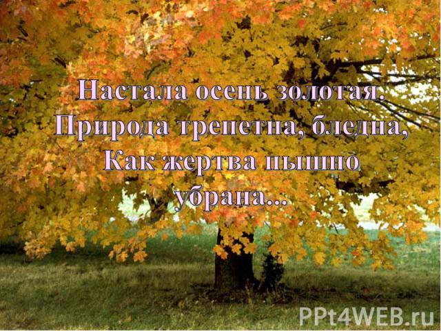 Настала осень золотая.Природа трепетна, бледна,Как жертва пышно убрана...