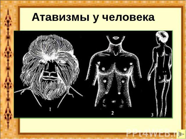 Атавизмы у человека