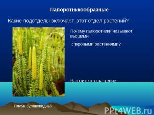 ПапоротникообразныеКакие подотделы включает этот отдел растений?Почему папоротни