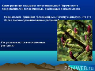 Какие растения называют голосеменными? Перечислите представителей голосеменных,