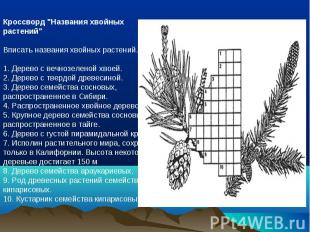 """Кроссворд """"Названия хвойных растений""""Вписать названия хвойных растений. 1. Дерев"""