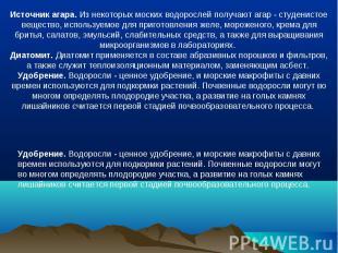Источник агара. Из некоторых моских водорослей получают агар - студенистое вещес