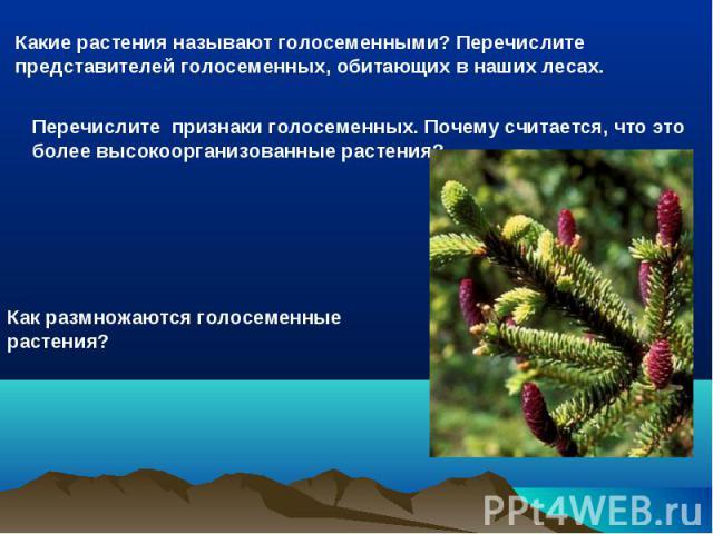 Какие растения называют голосеменными? Перечислите представителей голосеменных, обитающих в наших лесах.Перечислите признаки голосеменных. Почему считается, что это более высокоорганизованные растения?Как размножаются голосеменные растения?