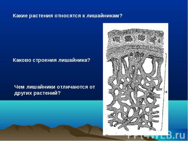 Какие растения относятся к лишайникам? Каково строения лишайника? Чем лишайники отличаются от других растений?