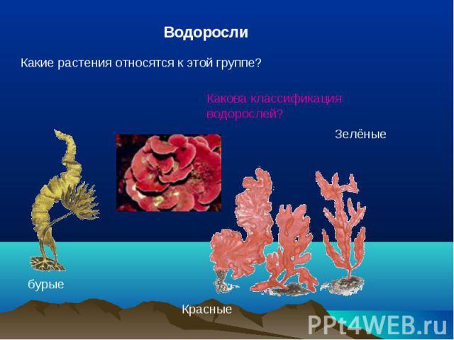 ВодорослиКакие растения относятся к этой группе?Какова классификация водорослей?
