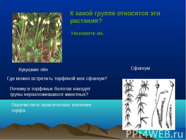 К какой группе относятся эти растения?Назовите их. Где можно встретить торфяной мох сфагнум?Почему в торфяных болотах находят трупы неразложившихся животных?Перечислите практическое значение торфа.