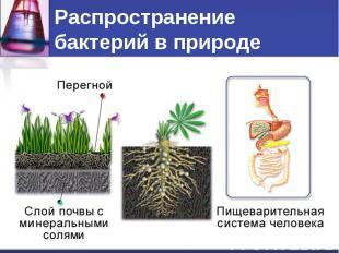 Распространение бактерий в природе