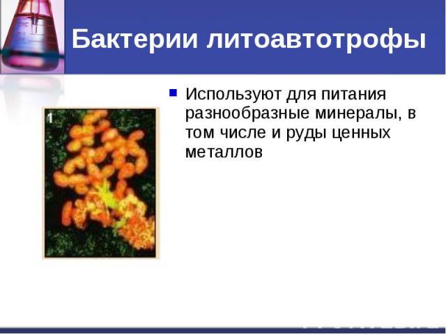 Бактерии литоавтотрофыИспользуют для питания разнообразные минералы, в том числе и руды ценных металлов