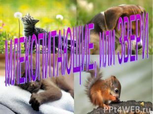 Млекопитающие, или Звери