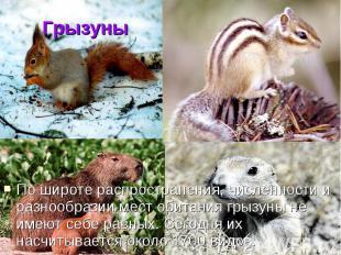 ГрызуныПо широте распространения, численности и разнообразии мест обитания грызу