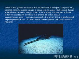 РЫБА-ПИЛА (Pristis pectinatus) или обыкновенный пилорыл, встречается у берегов А