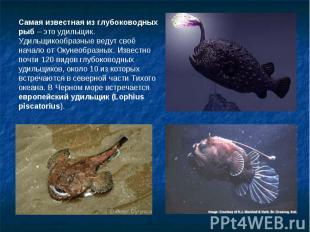 Самая известная из глубоководных рыб – это удильщик. Удильщикообразные ведут сво