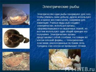 Электрические рыбы Электричество одни рыбы генерируют для того, чтобы убивать св