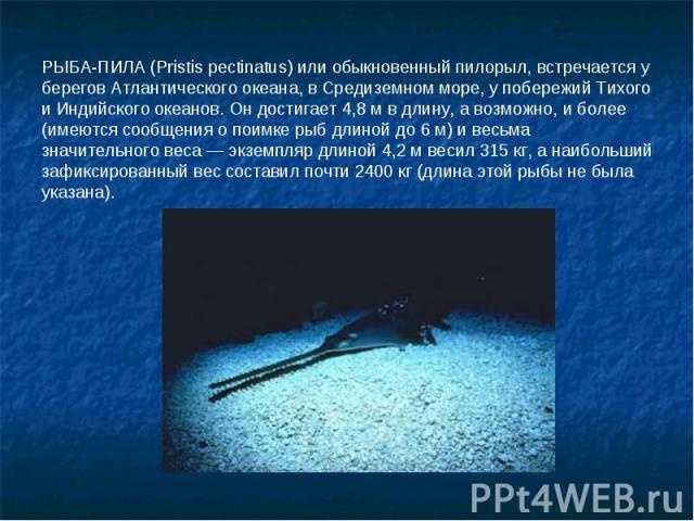 РЫБА-ПИЛА (Pristis pectinatus) или обыкновенный пилорыл, встречается у берегов Атлантического океана, в Средиземном море, у побережий Тихого и Индийского океанов. Он достигает 4,8 м в длину, а возможно, и более (имеются сообщения о поимке рыб длиной…