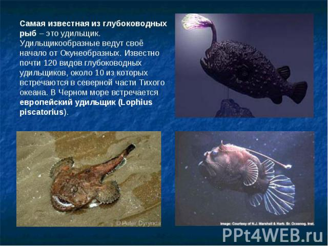 Самая известная из глубоководных рыб – это удильщик. Удильщикообразные ведут своё начало от Окунеобразных. Известно почти 120 видов глубоководных удильщиков, около 10 из которых встречаются в северной части Тихого океана. В Черном море встречается е…