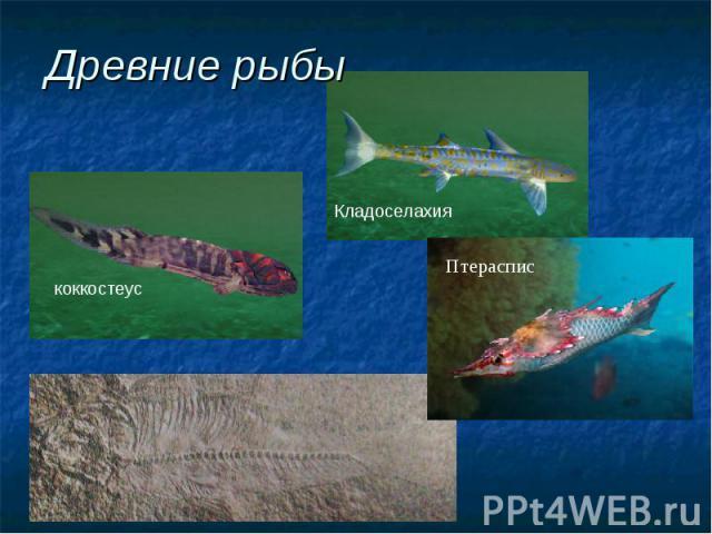 Древние рыбы коккостеус Кладоселахия Птераспис