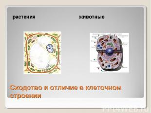 растения животные Сходство и отличие в клеточном строении