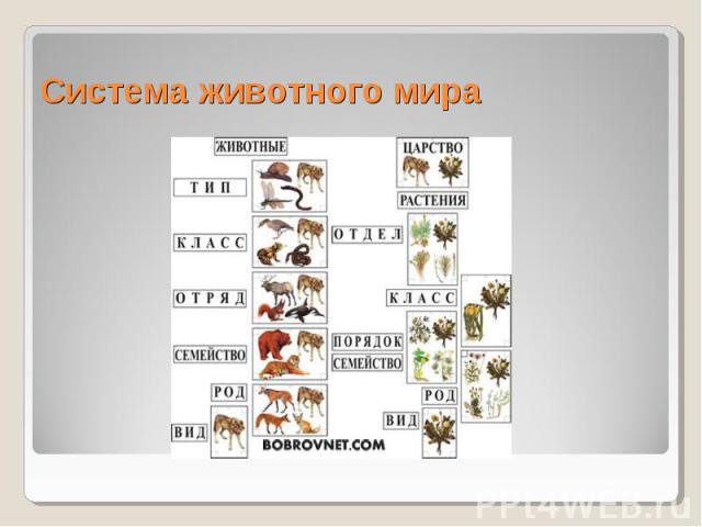 Система животного мира