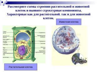 Рассмотрите схемы строения растительной и животной клеток и выявите структурные