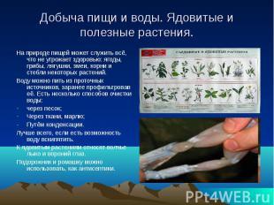 Добыча пищи и воды. Ядовитые и полезные растения.На природе пищей может служить