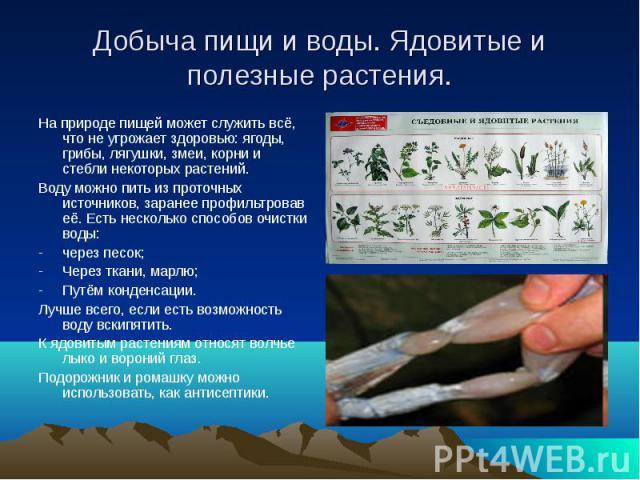 Добыча пищи и воды. Ядовитые и полезные растения.На природе пищей может служить всё, что не угрожает здоровью: ягоды, грибы, лягушки, змеи, корни и стебли некоторых растений.Воду можно пить из проточных источников, заранее профильтровав её. Есть нес…