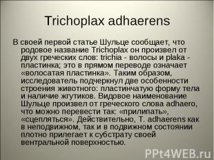 Trichoplax adhaerens В своей первой статье Шульце сообщает, что родовое название