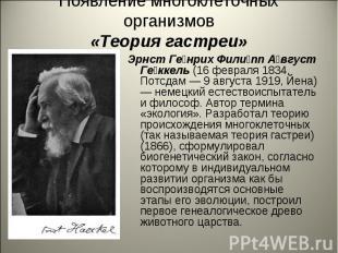 Появление многоклеточных организмов«Теория гастреи» Эрнст Генрих Филипп Август Г
