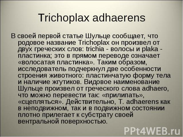 Trichoplax adhaerens В своей первой статье Шульце сообщает, что родовое название Trichoplax он произвел от двух греческих слов: trichia - волосы и plaka - пластинка; это в прямом переводе означает «волосатая пластинка». Таким образом, исследователь …
