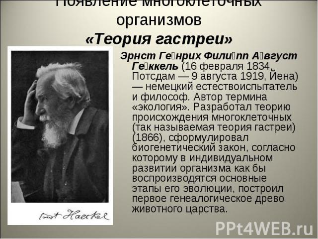 Появление многоклеточных организмов«Теория гастреи» Эрнст Генрих Филипп Август Геккель (16 февраля 1834, Потсдам — 9 августа 1919, Йена) — немецкий естествоиспытатель и философ. Автор термина «экология». Разработал теорию происхождения многоклеточны…