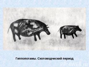 Гиппопотамы. Скотоводческий период