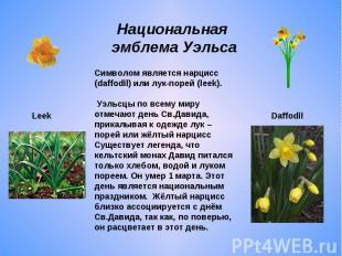 Национальная эмблема УэльсаСимволом является нарцисс (daffodil) или лук-порей (l