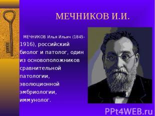 МЕЧНИКОВ И.И. МЕЧНИКОВ Илья Ильич (1845-1916), российский биолог и патолог, один