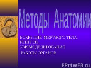 Методы Анатомии ВСКРЫТИЕ МЕРТВОГО ТЕЛА, РЕНТГЕН, УЗИ,МОДЕЛИРОВАНИЕ РАБОТЫ ОРГАНО