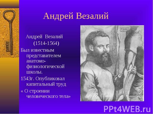 Андрей Везалий Андрей Везалий (1514-1564)Был известным представителем анатомо-физиологической школы.1543г. Опубликовал капитальный труд « О строении человеческого тела»
