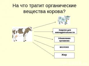 На что тратит органические вещества корова?Энергия для жизнедеятельностиОбновлен