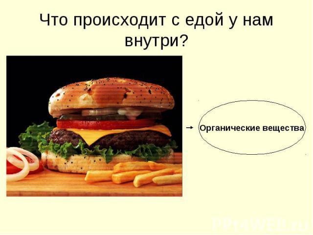 Что происходит с едой у нам внутри? Органические вещества