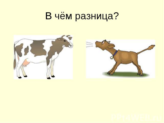 В чём разница?
