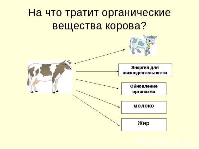 На что тратит органические вещества корова?Энергия для жизнедеятельностиОбновление организмамолокоЖир