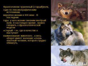 Фразеологизм травленый (старый)волк,судя по лексикографическим источникам,вероят