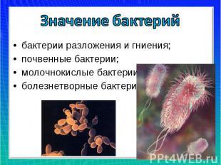 Значение бактерийбактерии разложения и гниения;почвенные бактерии;молочнокислые