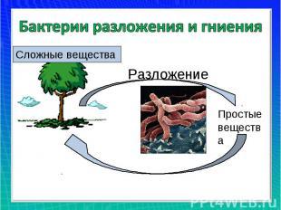 Бактерии разложения и гниенияСложные вещества Разложение Простые вещества