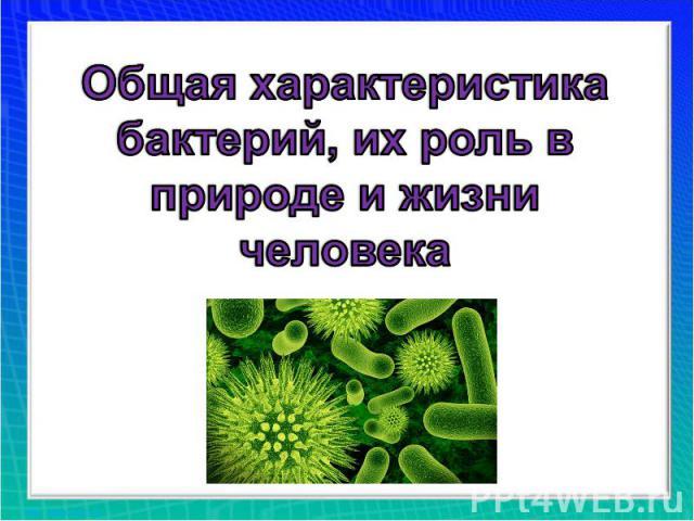 Общая характеристика бактерий, их роль в природе и жизни человека