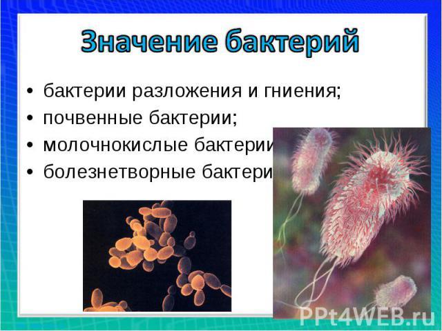 Значение бактерийбактерии разложения и гниения;почвенные бактерии;молочнокислые бактерии;болезнетворные бактерии.