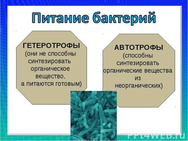 Питание бактерий ГЕТЕРОТРОФЫ(они не способны синтезировать органическое вещество, а питаются готовым)АВТОТРОФЫ(способны синтезировать органические вещества из неорганических)