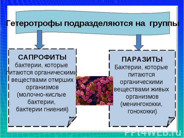Гетеротрофы подразделяются на группыСАПРОФИТЫбактерии, которые питаются органическими веществами отмршихорганизмов(молочно-кислые бактерии, бактерии гниения)ПАРАЗИТЫБактерии, которые питаются органическими веществами живых организмов(менингококки, г…